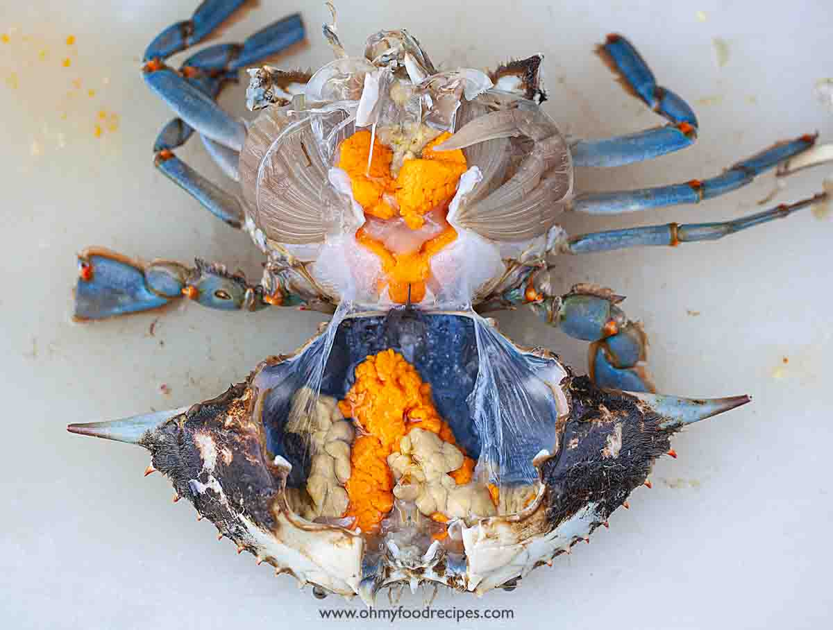 open crab shell